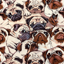 A lot of Pugs - Zelected By ZannaZ